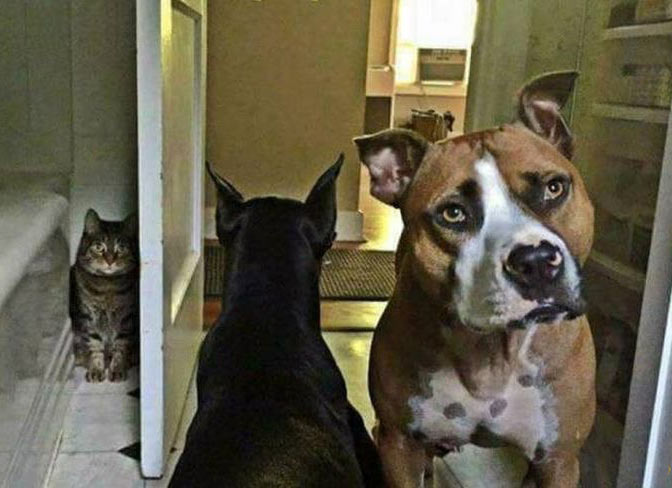 This is just an awesome dog - cat pic!