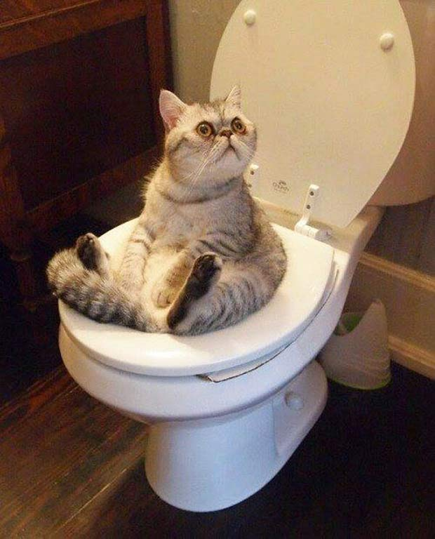When you just can't go and look to God for a little help... ~~..~~ ~Funny Pics Memes ~~..~~ cat sitting on toilet