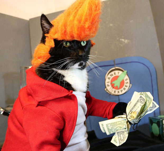 Meow! Awesome cat costume ~~ ~Funny Pics Memes