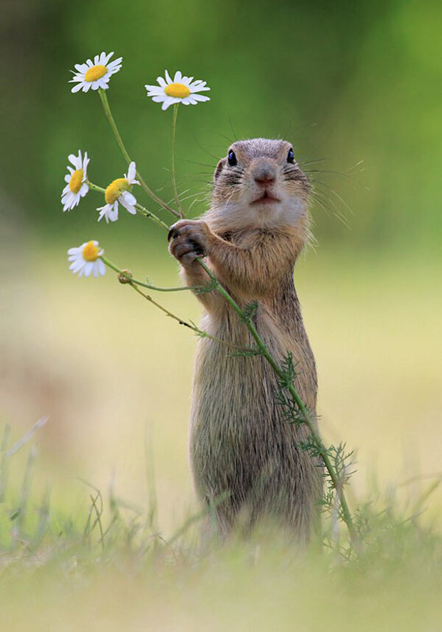 Romantic Squirrel bring flowers. At least someone does... ~Funny Pics Memes