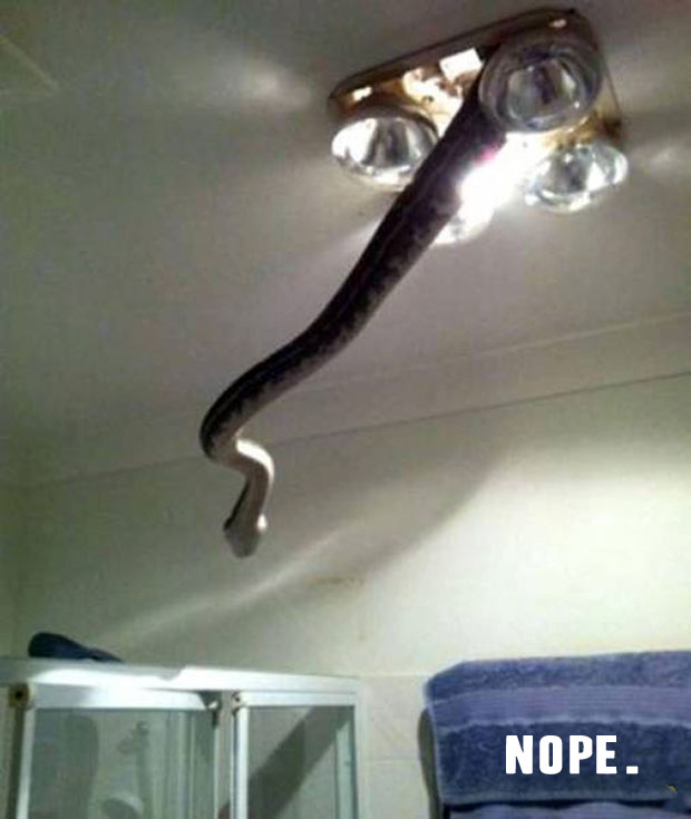 That's a big NOPE! The day I burned my house down! ~Funny Pics Memes snake coming through bathroom fan