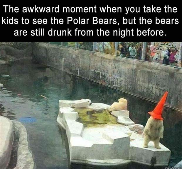 Funny meme Awkward moment at the zoo, drunk polar bears
