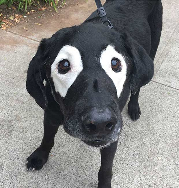 Fried Eggs ... Cool black dog with white patches around eyes.