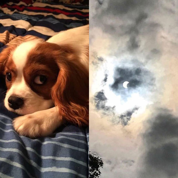 Total solar eclipse picture that looks like cute puppy dog, side-by-side comparison