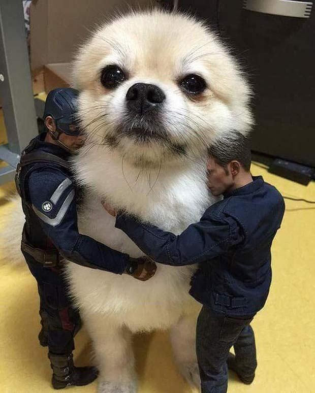 Aw! It's okay, buddy! ~ funny dog hugged by action figures