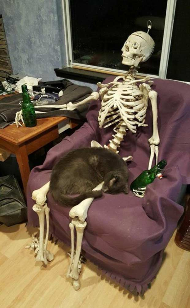 How long you reckon that cat's been sleeping there on that skeleton? ~ Funny Pics & Memes