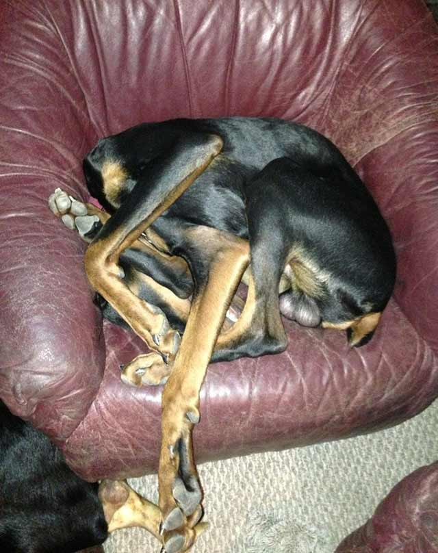 Funny Dogs ~ I think it's broken ~ Ikea pieces