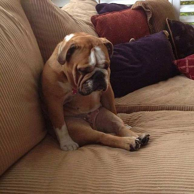Funny Dogs ~ I think it's broken ~ sitting sad on couch