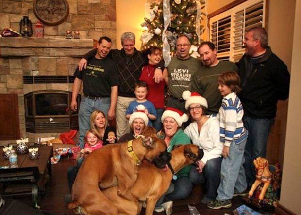 Looks like someone's excited for Christmas ~ funny awkward family Christmas pics dogs humping