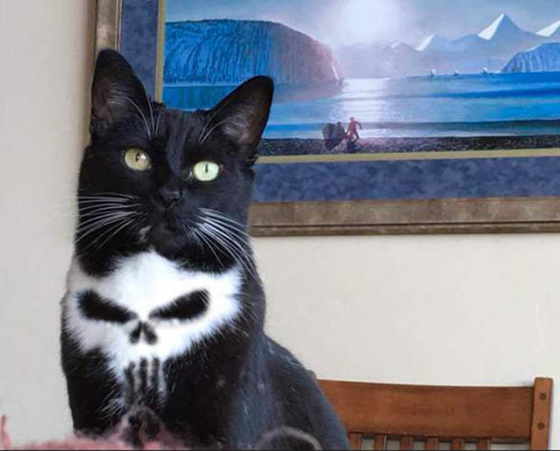 Awesome cat with awesome skull pattern on chest, fur, ~ funny pics, funny memes