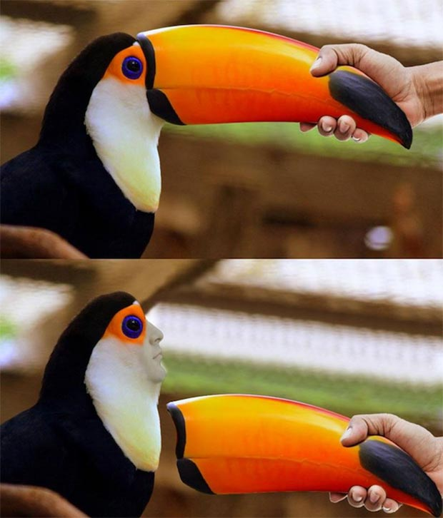 How to remove a Toucan beak ~ funny pics, funny memes