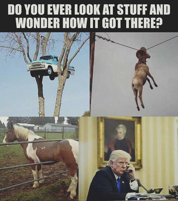 funny memes ever look at stuff and wonder how it got there Donald trump
