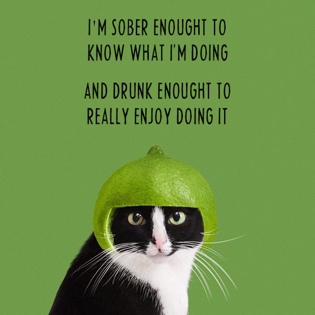 Inspirational sayings ~ funny cat memes ~ funny pictures ~ drunk and sober