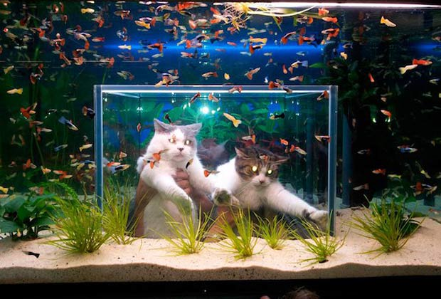 33 Funny Pics and Memes of the Day ~ funny cats in aquarium fish