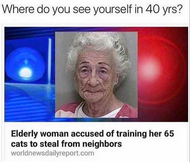 Funniest Memes of the Day ~ Funny news story cat lady elderly woman accused of training cats to steal from neighbors