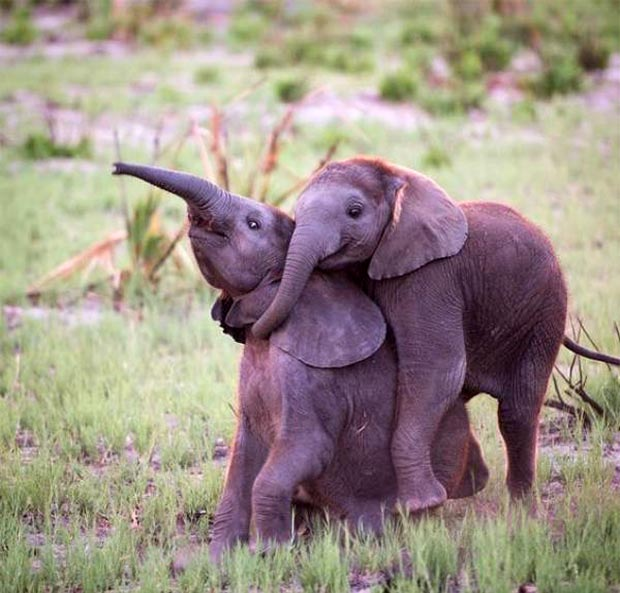 33 Happy Funny Animals Guaranteed to Raise Your Smile ~ Cute baby elephants hugging