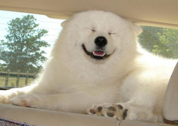 33 Happy Animals Guaranteed to Raise Your Smile ~ dog in car window