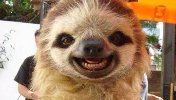33 Happy Animals Guaranteed to Raise Your Smile ~ Funny Sloth