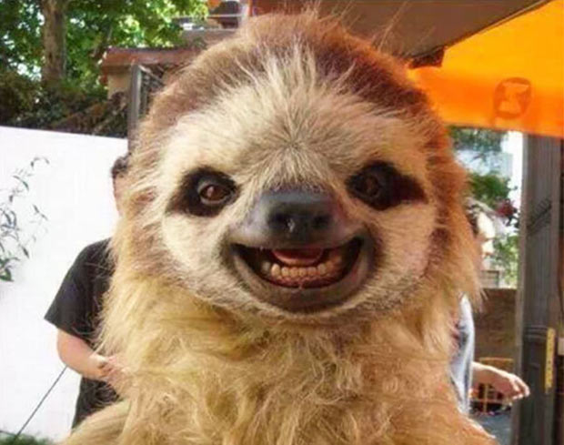33 Happy Funny Animals Guaranteed to Raise Your Smile ~  Sloth