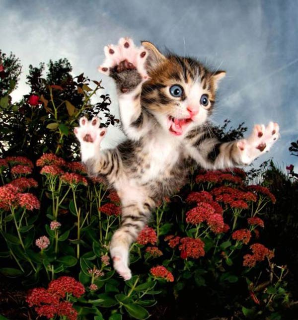 33 Funny Animals Guaranteed to Raise Your Smile ~ Jumping cute kitten