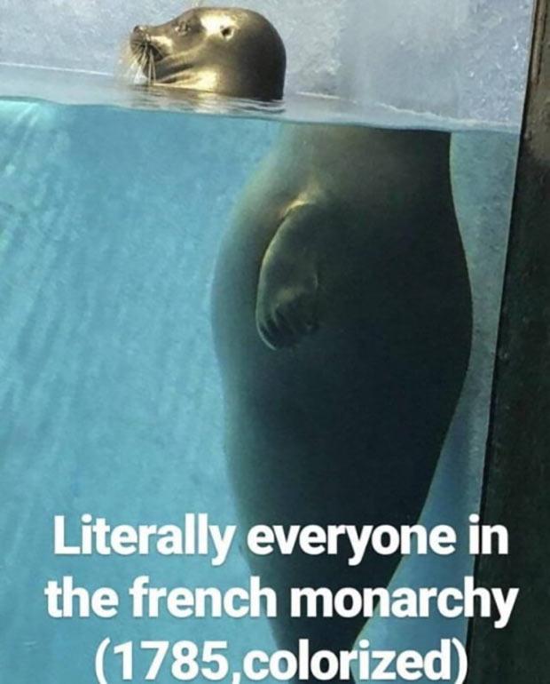 35 Funny Pics and Memes Ya Gotta See ~ French monarchy history memes