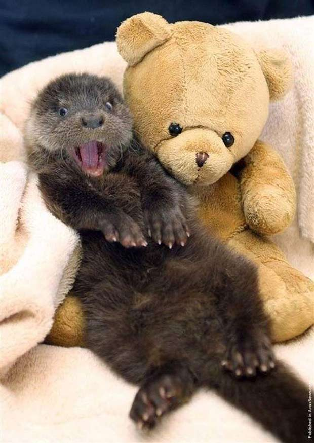 33 Funny Animals Guaranteed to Raise Your Smile ~ Happy Otter