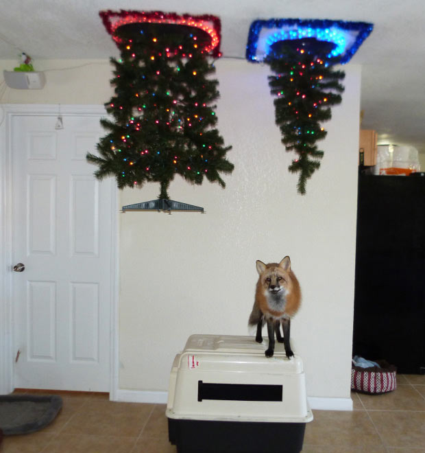 21 Brilliant Ways to Protect Christmas Trees from Pets