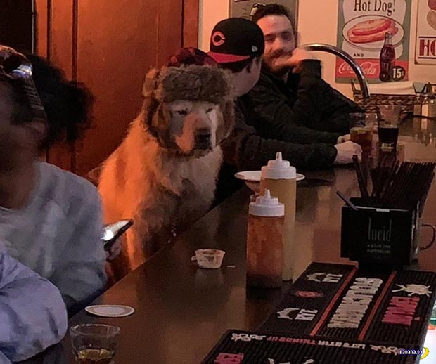 35 Funny Memes and Random Pics to Fuel Your Humor ~ cute dog in hat sitting at bar
