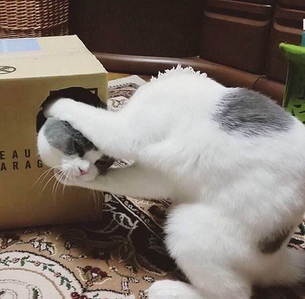 33 Funny Memes and Crazy Pics That'll Tickle Your Soul ~ cats fighting box headless