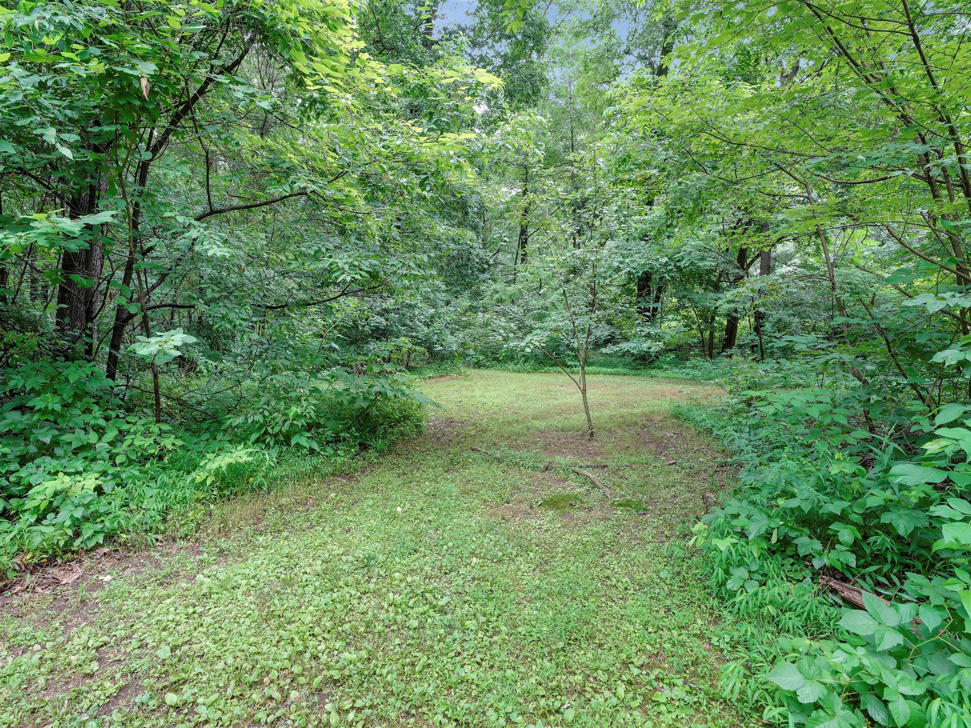 850 Prescott Dr. - wooded setting 2