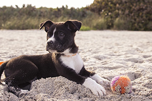 Incorporating puppies into your posts is never a bad blogging habit.
