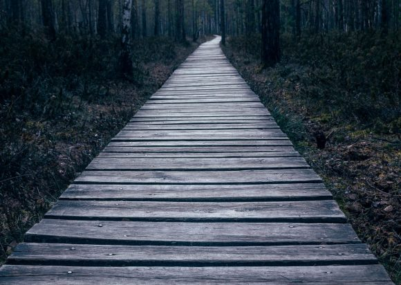 empty wooden pathway on forest