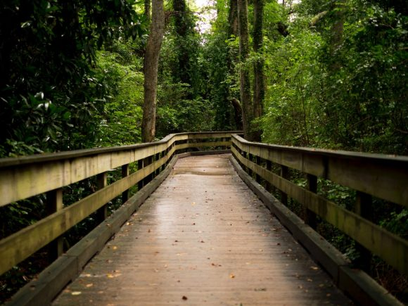 brown wooden bridge between forest