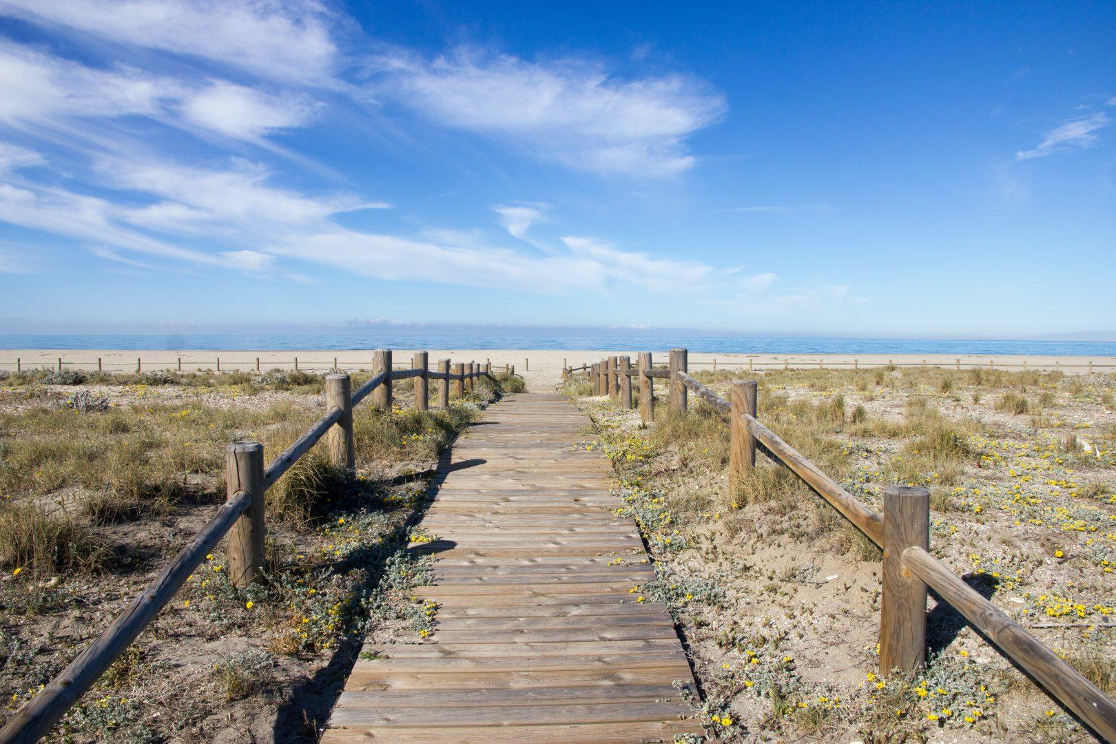 brown wooden boardwalk seashore scenry