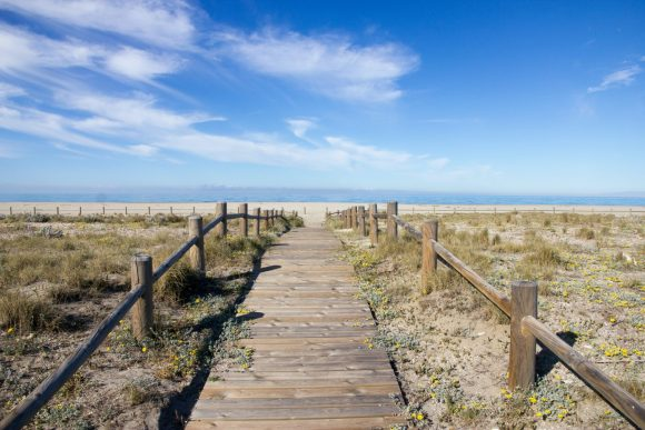 brown wooden boardwalk seashore scenry