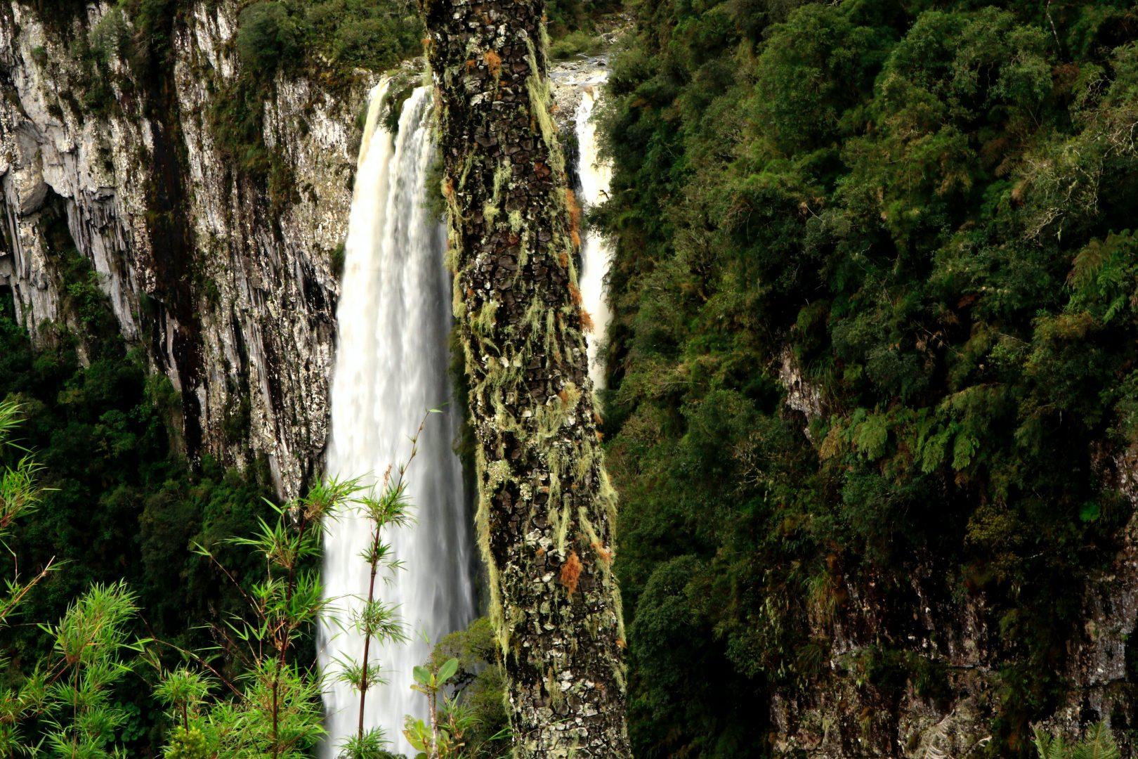 flowing waterfalls near trees during daytime