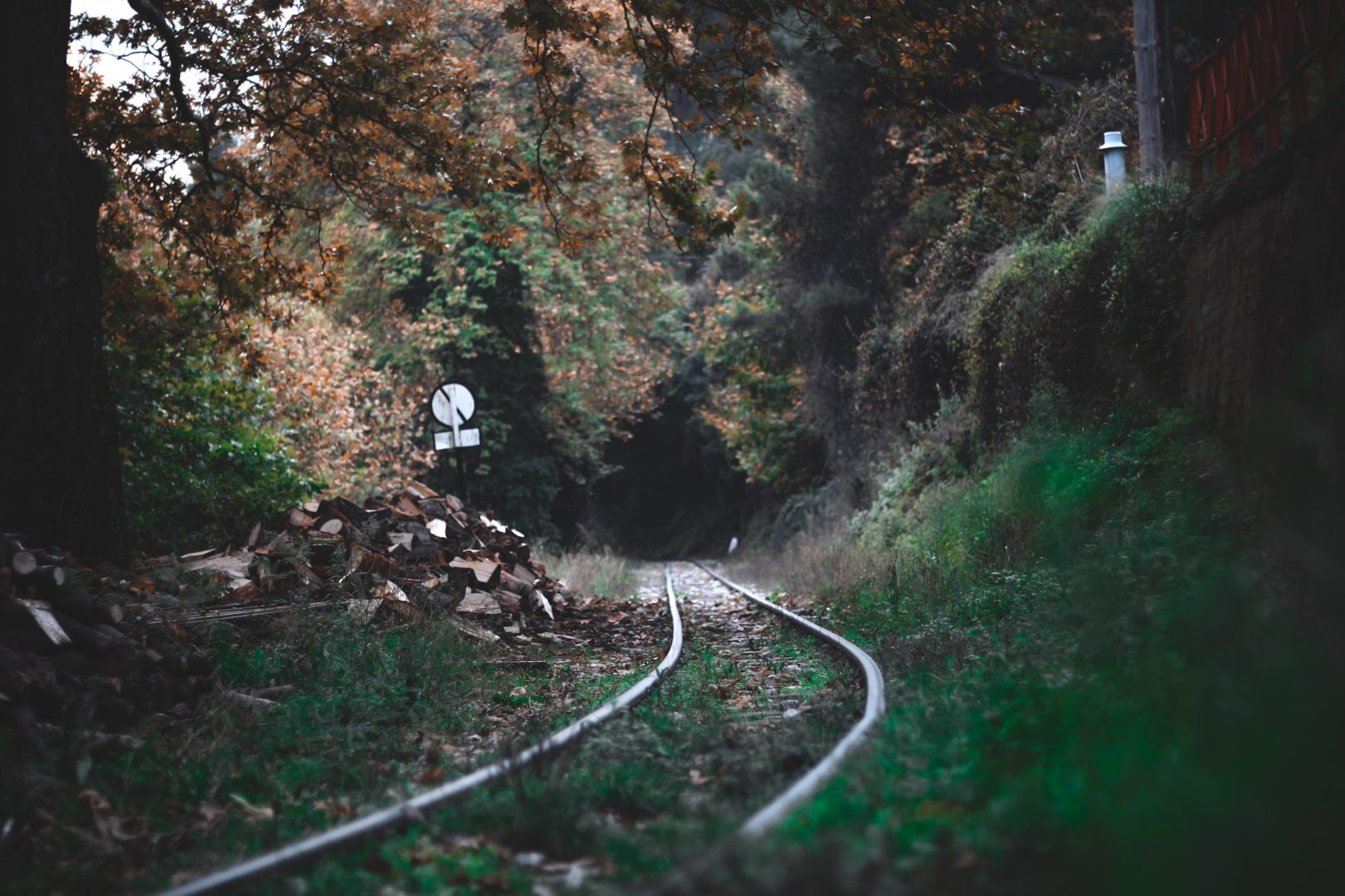 railroad surrounded with trees