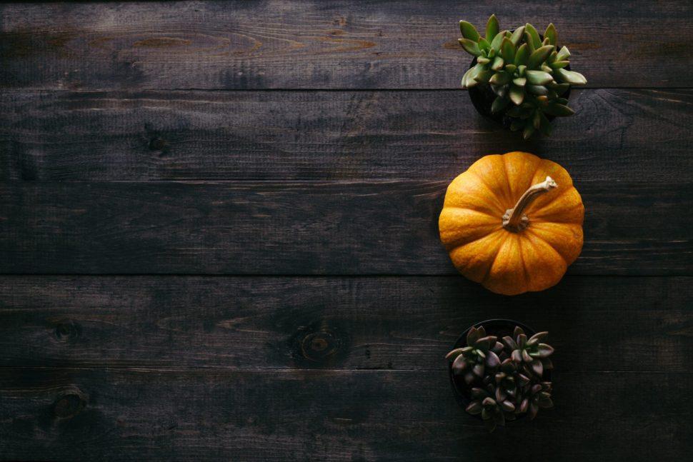 photo of orange squash beside potted succulent plants