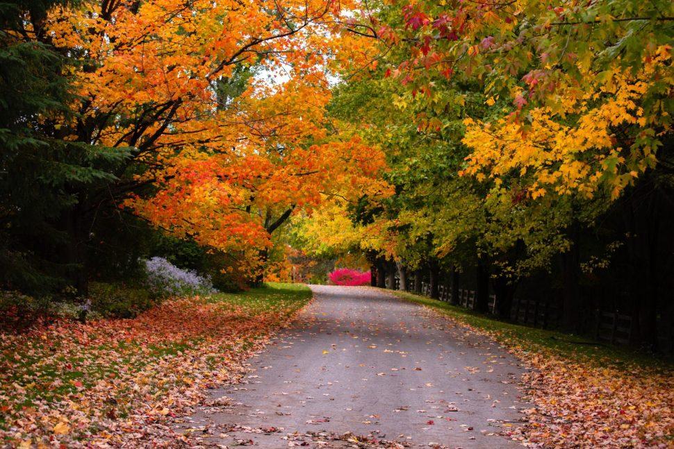 gray concrete pathway between trees