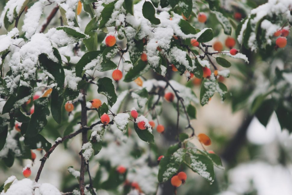 shallow focus photography of trees filled of snow