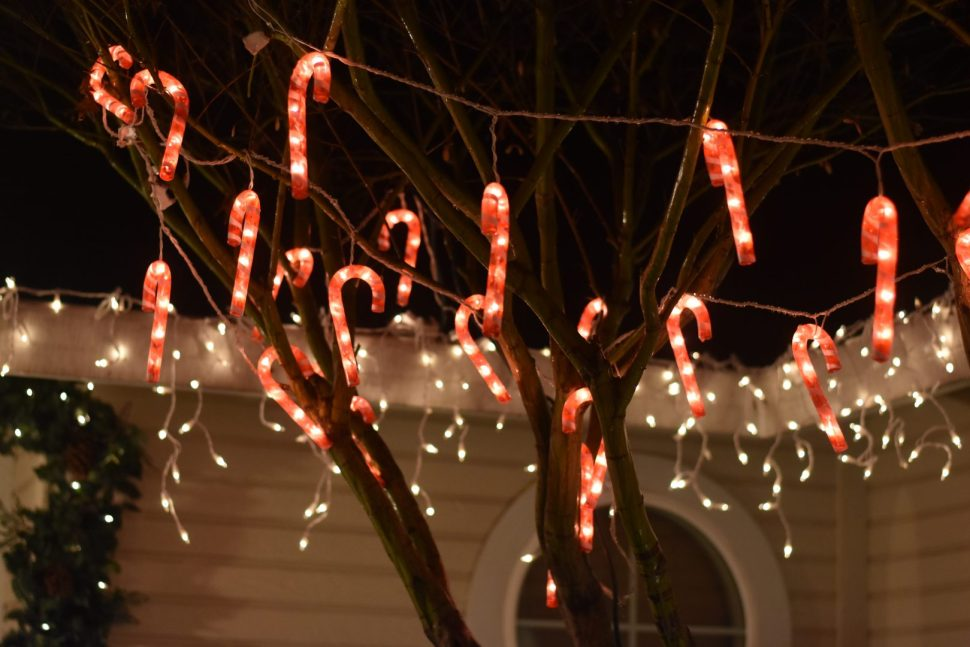 red-and-white candy canes string lights on tree at nighttime