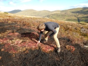 Checking out the unburned Sphagum in the muirburn