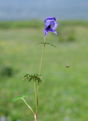 The hum of oncoming summer (Ok, not a bee)