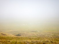 Fog over the floodplain