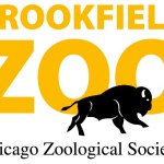 Veterinarians Perform Groundbreaking Hip Surgery on Tiger at Brookfield Zoo