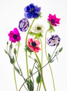 Flower Aglow