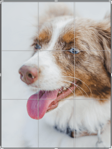 dog rule of thirds
