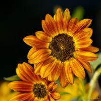 plants - IMG_1223-2.jpg