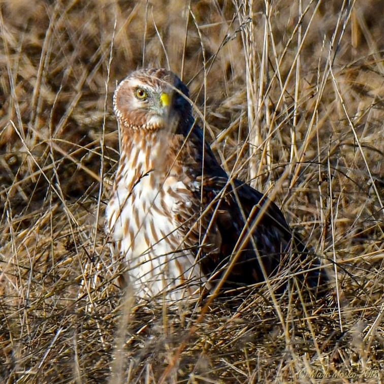 birds - 850_0159.jpg