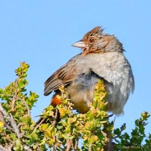 birds - 850_1817.jpg